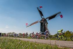 Peloton on the Molendijk at Batenburg, stage 2 from Arnhem to Nijmegen running 190 km of the 99th Giro d'Italia (UCI WorldTour), The Netherlands, 7 May 2016. Photo by Pim Nijland / PelotonPhotos.com | All photos usage must carry mandatory copyright credit (Peloton Photos | Pim Nijland)