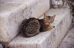 Tabby cat lying outside on stone steps,