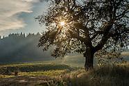 Wine - Oregon