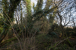 Denham, UK. 3 February, 2020. Trees in Denham Country Park. Environmental activists have occupied some of the trees as part of plans to seek to prevent works for the HS2 high-speed rail link including the felling of 200 trees and the construction of a Bailey bridge, compounds, fencing and a parking area. One side of the river bank lies within a wetland nature reserve forming part of a Site of Metropolitan Importance for Nature Conservation (SMI).