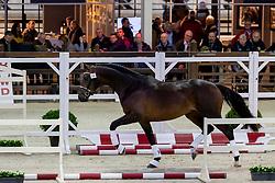 064, Rolex W Van Prinsenhof's<br /> BWP Hengstenkeuring -  Lier 2020<br /> © Hippo Foto - Dirk Caremans<br />  17/01/2020