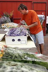 Il Mercato dei fiori di Sanremo: Reparto confezionamento *** Local Caption ***<br /> <br /> The flower market of Sanremo: Department packaging