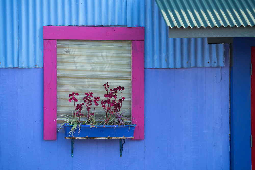 USA, Hawaii, Big Island,USA, Hawaii, Big Island,Hilo, window with orchids