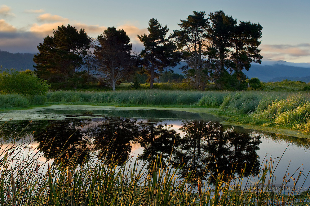 Trees reflected in pond in morning light at the Arcata Marsh, Arcata, California