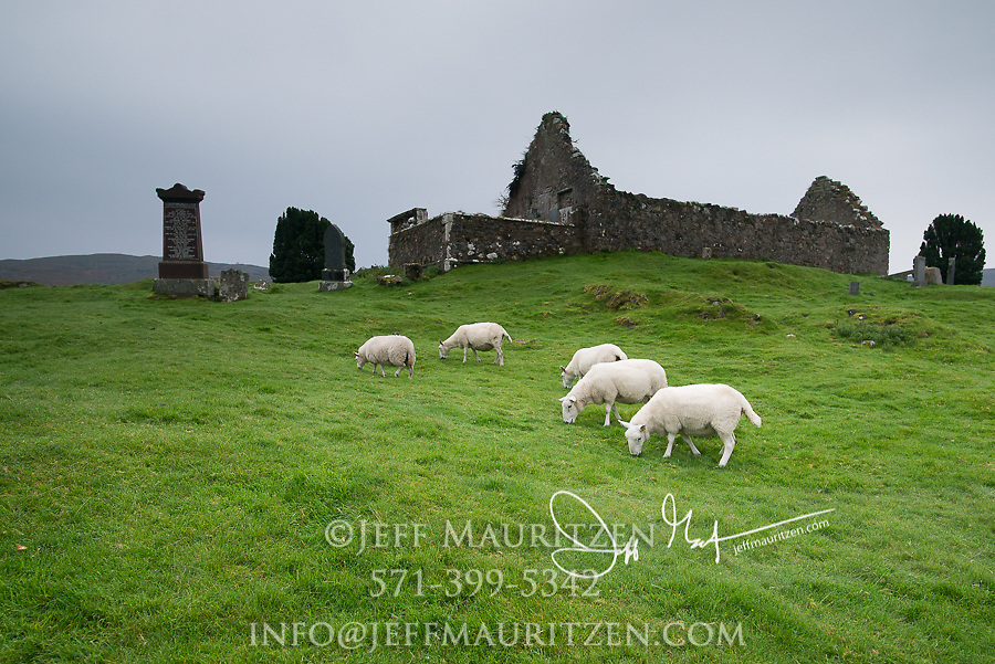 Sheep graze in front of Cill Chriosd (Christ's Church) on the Isle of Skye, Scotland.