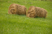 two straw bales in fresh new growing grass France