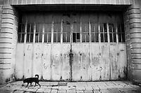 Un cane passa davanti al grande portone con i vetri rotti di un edificio in disuso nella poazza di Racale (LE)