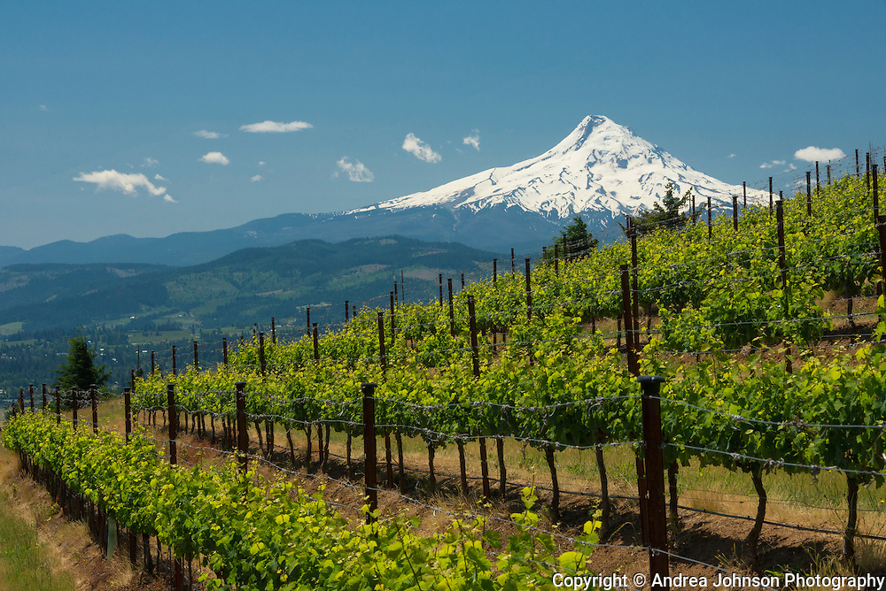 Celilo Vineyard, Columbia Gorge AVA, Washington