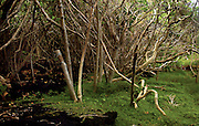 Tree limbs drape along the peaceful waters streaming off of the warm ponds about Ahalanui Park's shallow, volcano-warmed, spring-fed waters clear and sprinkled with fish.