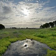 Clouds, sun, reflections, meadows and ponds at the Bay Lands area off of Marsh Road in E. Menlo Park.