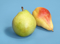 two pears on blue