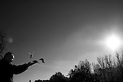 Een man voert vogels uit zijn hand achter de Notre Dame in Parijs<br /> <br /> A man is feeding birds near Notre Dam Paris