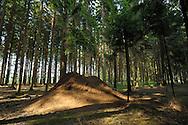 DEU, Deutschland: Ameisennest der Roten Waldameise (Formica polyctena) im Wald, Nest mit einer Doppelkuppel, Staerke des Volkes ca. 3 Millionen Individuen, Hoehe der Nestkuppel ca. 1,80 m, Guenterfuerst, Erbach, Hessen | DEU, Germany: Nest of European red wood ants (Formica polyctena), anthill with double dome, ca 3 Million individuals, high of the hill ca 1,80 meter, Gunterfurst, Erbach, Hesse |