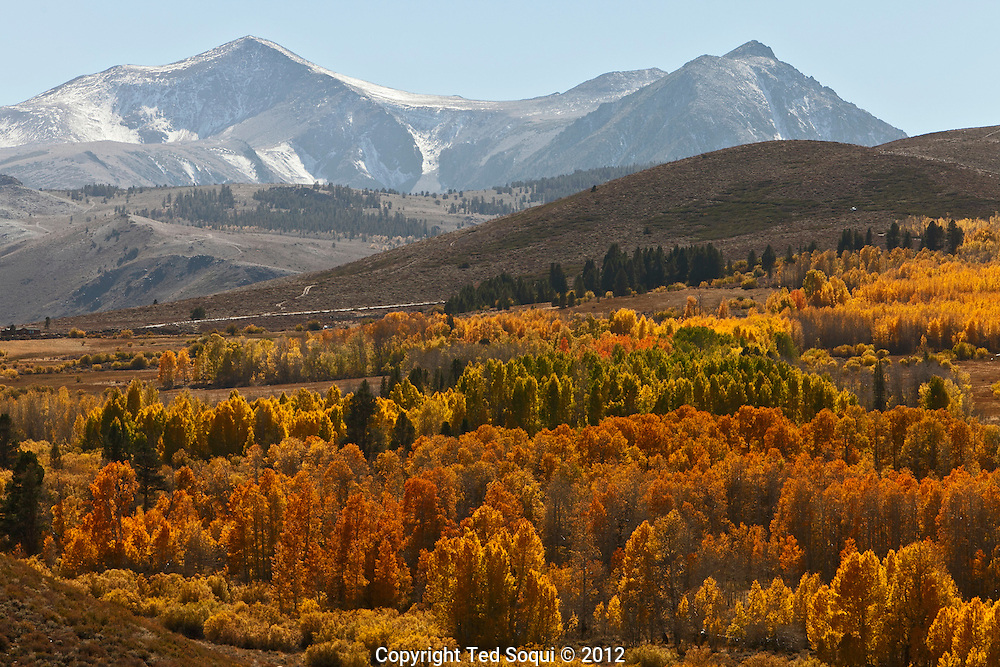 Aspen tress with the Sierra mountain range..The autumn season in the Eastern High Sierra area of California. .Thousands of trees are changing colors and producing brilliant and vibrant colors leaves all over the Eastern Sierra valley.