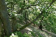 alte Eichen, Naturschutzgebiet Kahle Haardt bei Scheid am Edersee, Nordhessen, Hessen, Deutschland | old oaks, nature reserve Kahle Haardt near Scheid on Lake Eder, Hesse, Germany