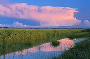 Storm clouds reflected in ditch<br /> Dugald<br /> Manitoba<br /> Canada
