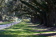 Tunnel of spanish moss covered live oak trees form the entry to Boone Hall Plantation in Mt. Pleasant, SC, just outside Charleston. Boone Hall is also one of America's oldest working, living plantations. continuously growing and producing crops for over 320 years.