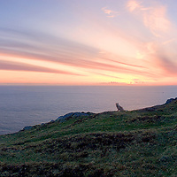 Panoramic Sunset Valentia Island with dog, County Kerry, Southwest Ireland / vl001