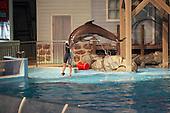 Dolphin, sea lion, walrus, seal