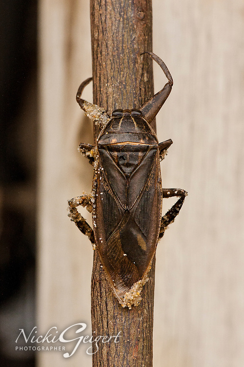 Animals, Insect, Beetle.<br /> MG3131
