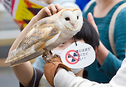 A barn owl joins around 4,000 people in a demonstration against nuclear power in Tokyo, Japan on  10 April 20011. .Photographer: Robert Gilhooly