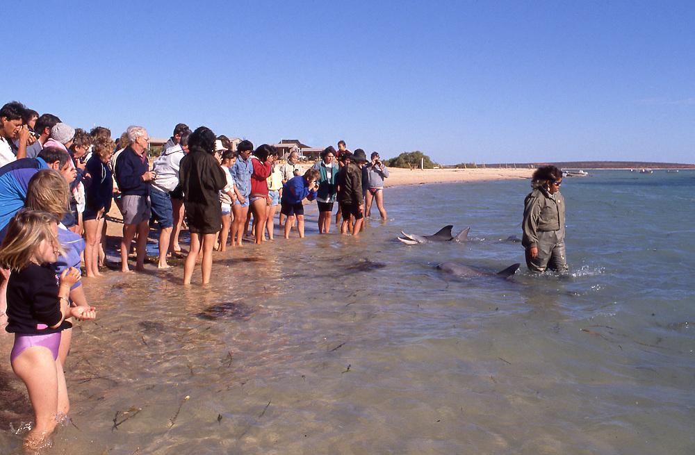 Tourists watch dolphins on the beach at Monkey Mia, Western Australia.