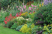 colourful bed with penstemons