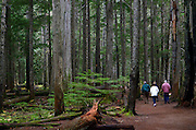 Seniors walking the Ross Creek Cedars Trail in the Kootenai National Forest. Northwest Montana