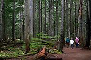 Seniors walking the Ross Creek Cedars Trail in the Kootenai National Forest. Northwest Montana