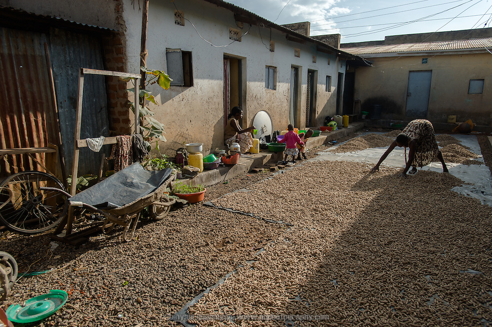 Zulie Auma, an Afripads customer, spreading out groundnuts to dry in the sun at her home near Tororo, Uganda on 2 August 2014.