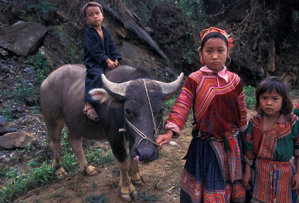 Hmong hill tribe children and water buffalo, near Sapa, Vietnam