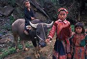 Hmong hill tribe children and water buffalo, near Sapa, Vietnam