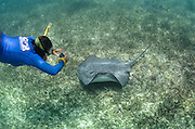 Caribbean Whiptail Ray (Himantura schmardae) & Rachel Graham<br /> Shark Ray Alley<br /> Hol Chan Marine Reserve<br /> near Ambergris Caye and Caye Caulker<br /> Belize<br /> Central America