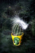 a cactus in a plant pot with a white feather behind a window with rain drops