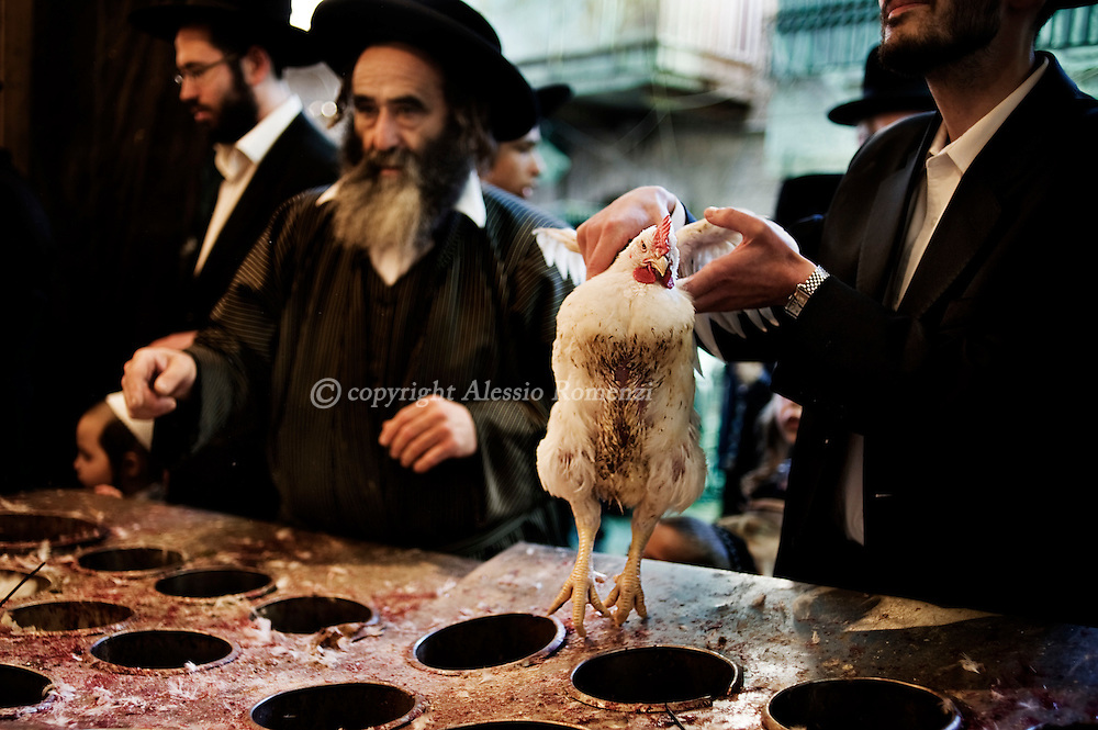JERUSALEM : An Ultra-Orthodox Jewish man hold a chicken during the Kaparot ceremony in Mea Shearim neighborhood of Jerusalem on October 6, 2011. The Jewish ritual is supposed to transfer the sins of the past year to the chicken, and is performed before the Day of Atonement, or Yom Kippur, the most important day in the Jewish calendar, which this year will start on sunset on October 7. ALESSIO ROMENZI