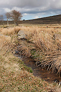 A typical moorland scene from Dartmoor, with a small stream or rivulet and  an isolated stand of trees.