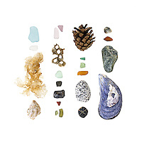 Sea glass, Irish Moss (Chondrus crispus), Waved Whelk (Buccinum undatum), Northern Rock Barnacle (Semibalanus balanoides), beach stones (schist, granite, moss quartz, possibly mica), Red Pine cone (Pinus resinosa), Blue Mussel (Mytilus edulis).