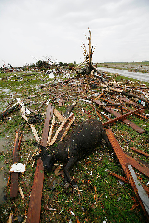 The impact from a tornado near Moscow In. took its toll on livestock and structures left in ruin Wednesday June 4, 2008. The farm was one of several destroyed on Skating Rink Rd. just outside of the Rush Co. town. (Mike Fender / The Star)