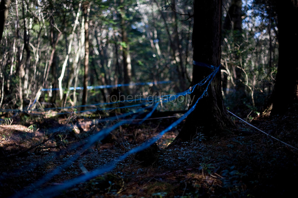 Blue tape indicates areas that have been searched for bodies in Aokigahara Jukai in Yamanashi Prefecture, Japan on 20 Nov. 2009. Suicide in the forest dates back to the 1960s following the release of a popular work of fiction that ends with an implied suicide pact in the forest.