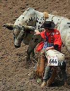 Bull Fighter assist Rider Justin Clint Koon during Friday's action, 27 July 2007, Cheyenne Frontier Days