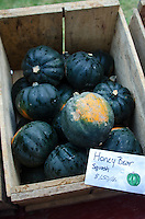 'Honey Bear' squash for sale on a rainy day at the Common Ground Fair farmers market, Unity Maine.