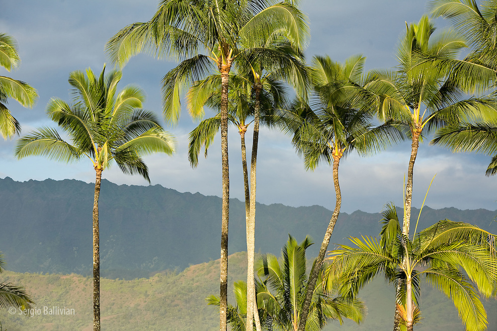Palm trees and volcaninc ridges as seen from Hanalei Beach on the north shore of Kauai. Hawaii.