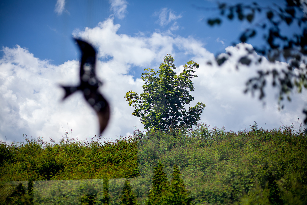 Die ehemaligen Grenzstation in Dolni Dvoriste - von 1955 bis 1989 lag der Ort am Eisernen Vorhang. Eine aufgeklebte Vogel Silhouette an einer Fensterscheibe der Grenzstation.