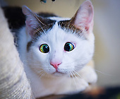 Bubbles the Cross-eyed cat