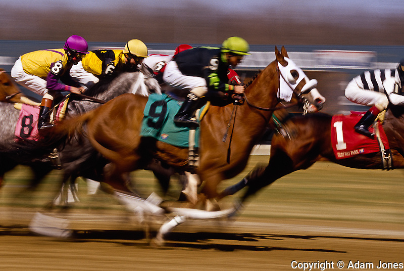 Thoroughbred horse racing at Turfway Park, Union, Kentucky