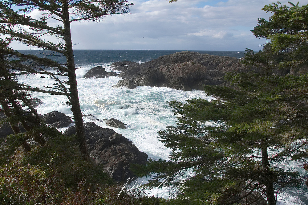 Stormy seas brerak on to rocks at Amphitrite Point on the Wild Pacific Trail. Ucluelet, Vancouver Island, Canada   Photo: Peter LLewellyn