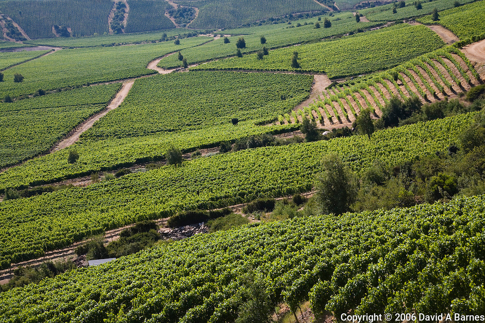 Montes vineyards, Colchagua Valley, Chile