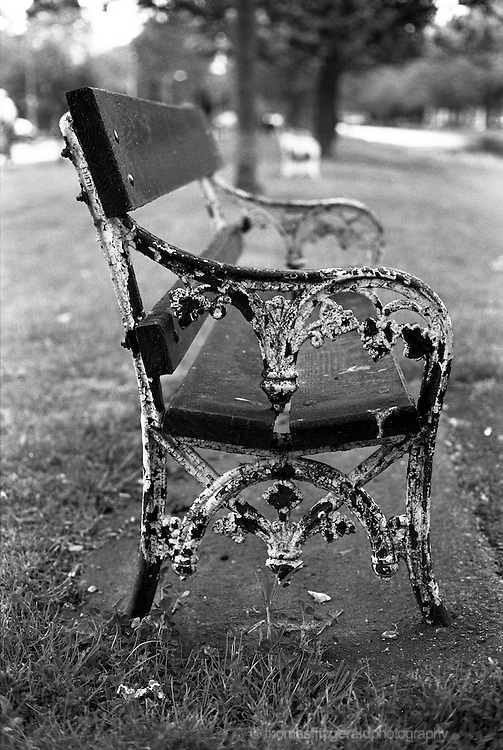 An Old bench sits by the Canal in Dublin City, it's paint peeling in a beautiful textured way. Shot on Black and White Film and Contains Grain