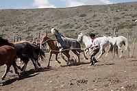 GAUCHOS ATRAPANDO CABALLOS EN UN CORRAL PARA RECORTARLE LOS CRINES, CAMNINO A VALLECITOS, POTRERILLOS, PROVINCIA DE MENDOZA, ARGENTINA