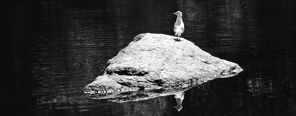Shot of a bird on a rock in Central Park.